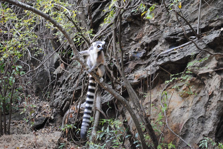 mjesta za upoznavanje Madagaskar