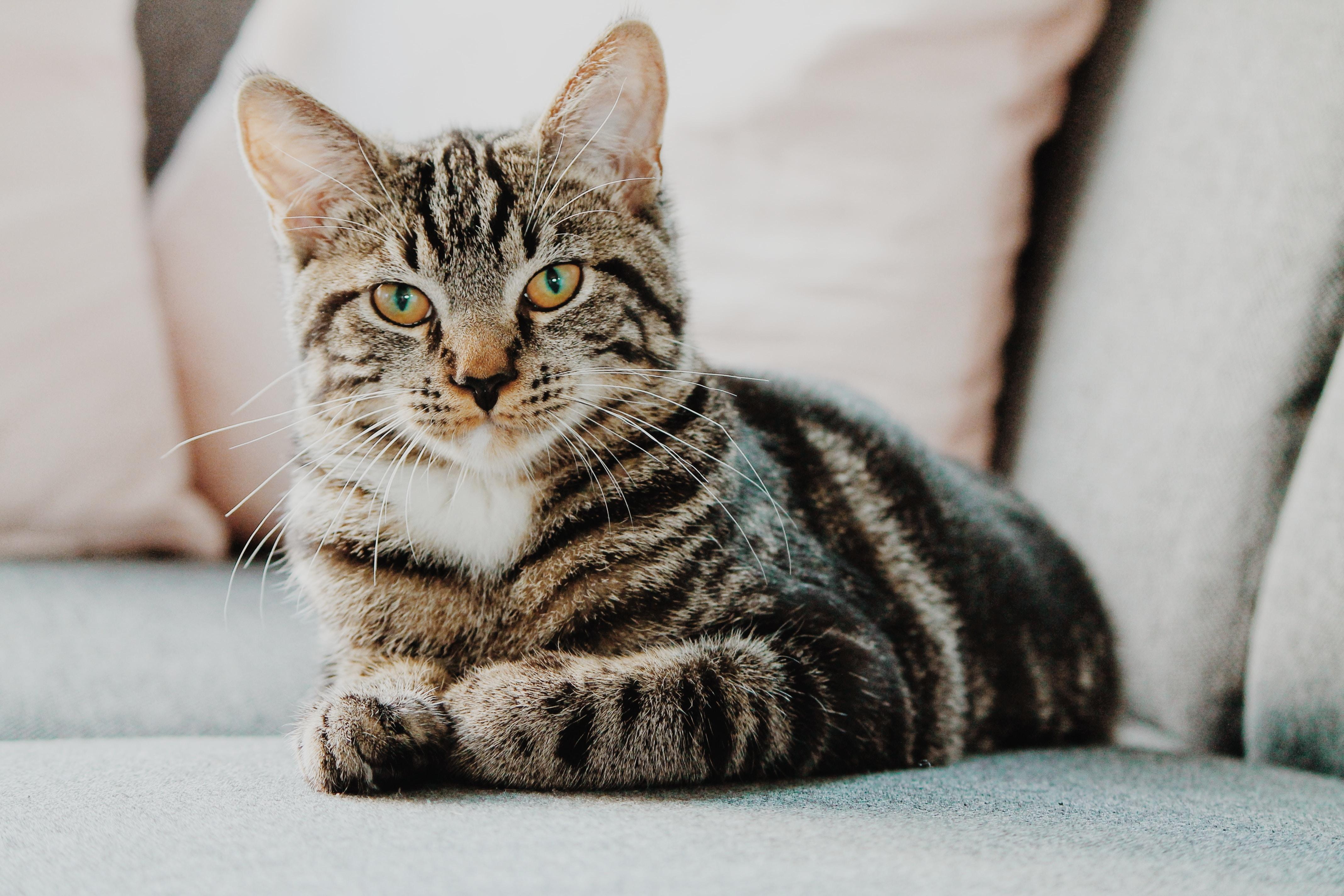 veliki ljubitelj maca galerije milf porno pic