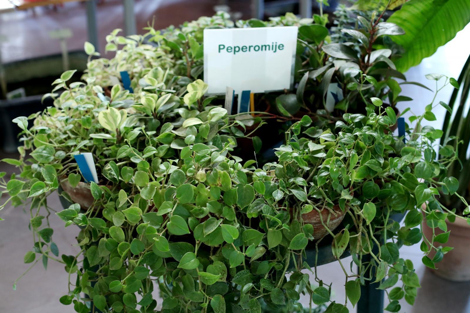 Rasprodaja biljaka u Botaničkom vrtu: Iskoristite priliku